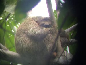 slothbutler